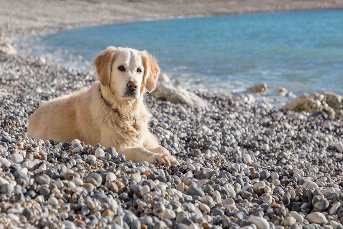 dog friendly lulworth cove